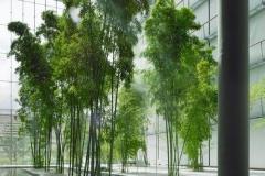 Bamboo Grove - Live