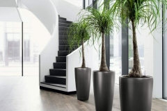 Modern & traditional potted plants
