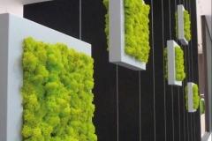 Verical Garden - Moss & Plant Wall