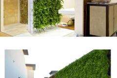 Green wall / Vertical Garden – Indoor & Outdoor